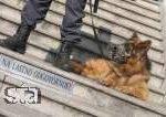 Policija prodaja službeno psičko Ino