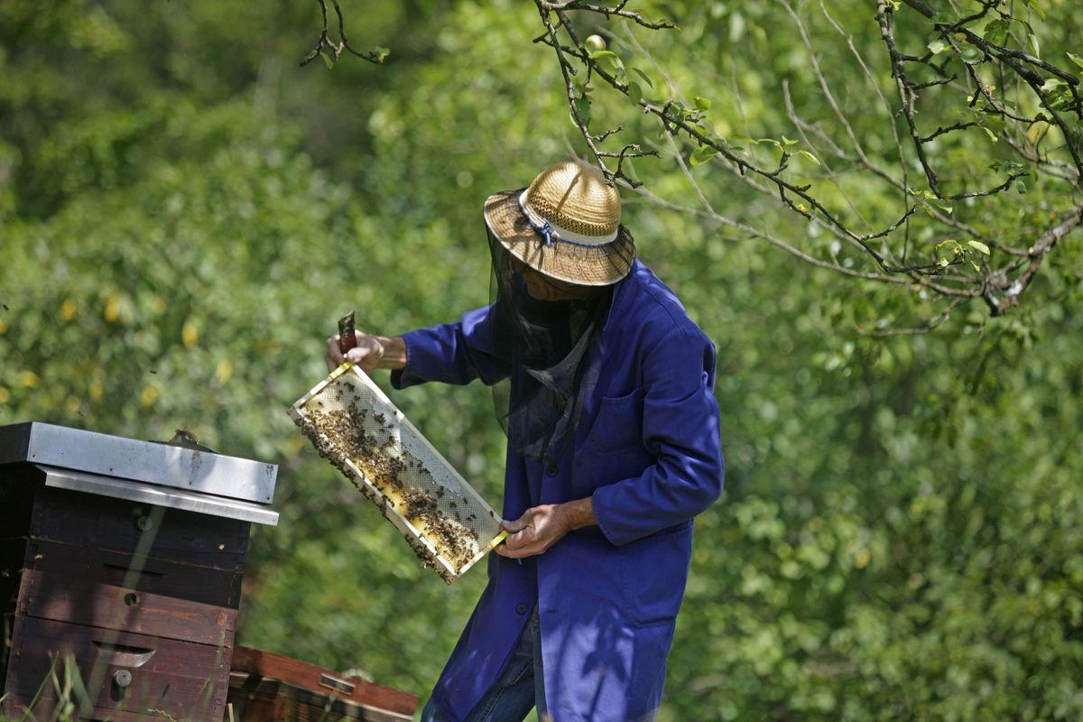Čebelar na delu. Foto: BoBo