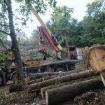 Celoten posek lesa v Sloveniji lani količinsko manjši kot v letu 2018