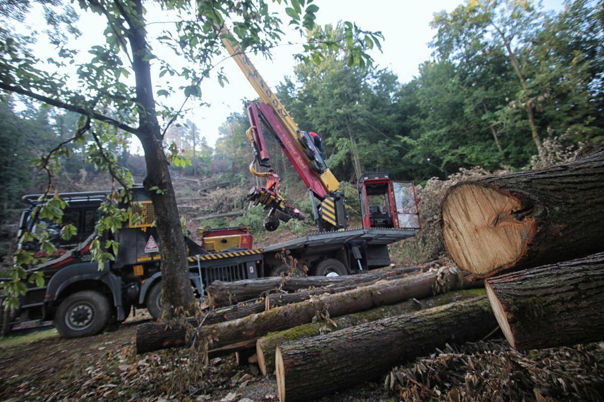 Več kot polovico celotnega poseka lesa je predstavljala sanitarna sečnja. Foto: BoBo