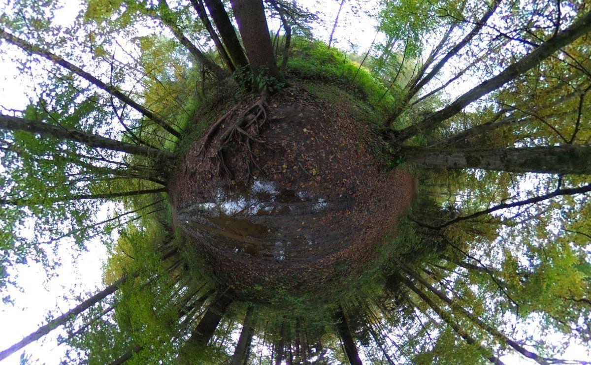 Gozdovi, ki so jih v preteklih letih uničile naravne ujme – žledolom in nato še podlubniki – so večinoma že sanirani. Foto: BoBo